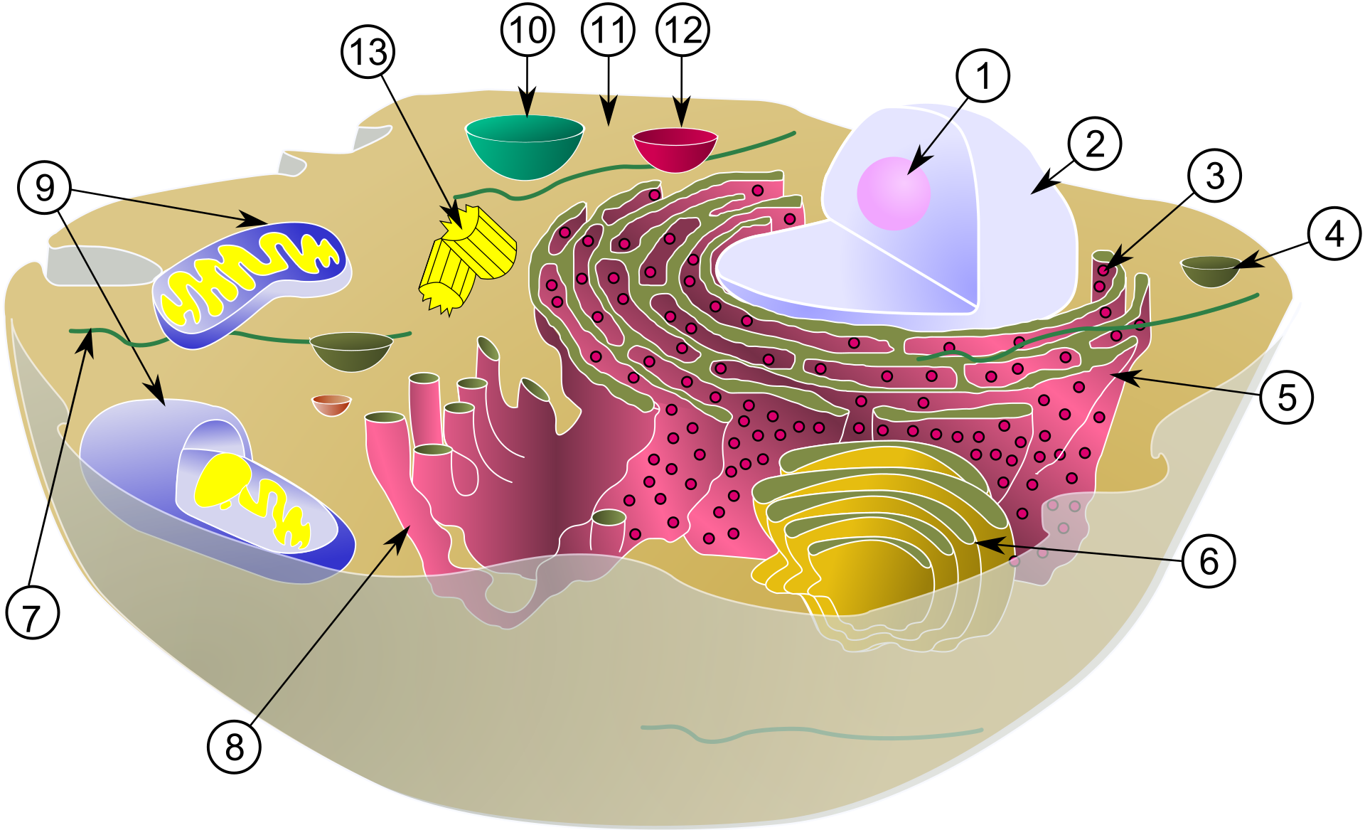 Biological_cell